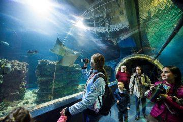 Nyíregyházi állatpark Ocenárium