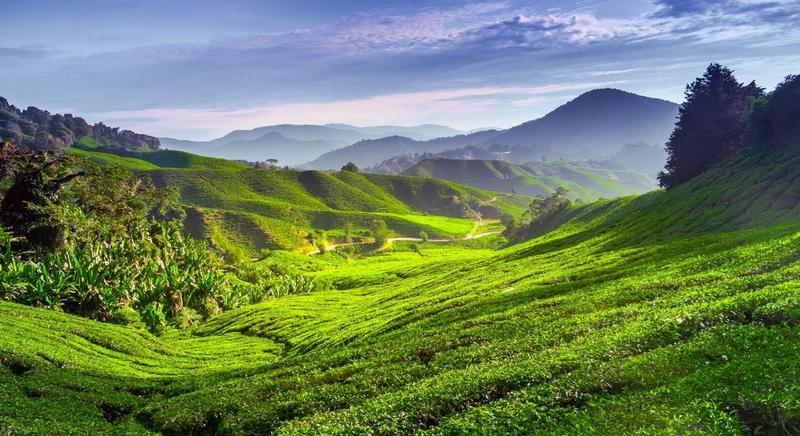 malájzia Cameron-felföld Cameroon Highlands
