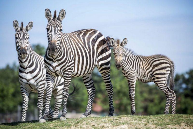 veszprémi zoo állatkert