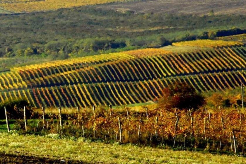 Matra wine region