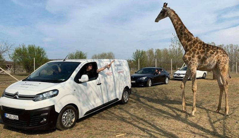 Magyar Nemzeti Cirkusz Safari Parkja szada